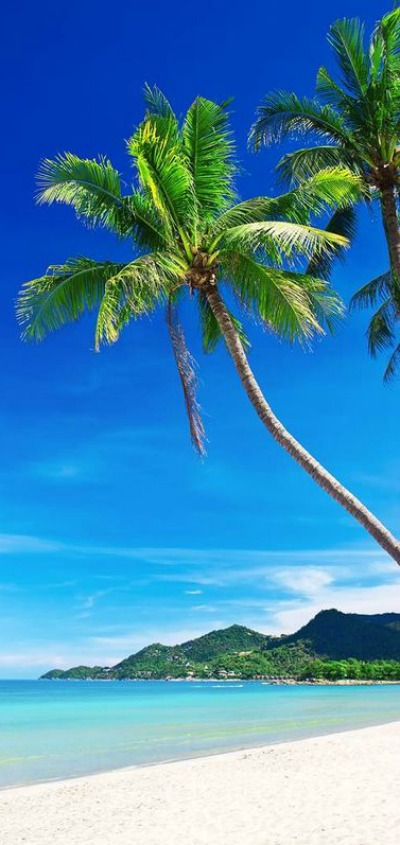 Beaches, Palm Trees